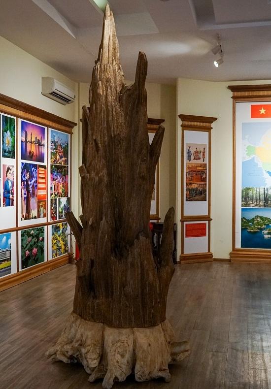 Bảo tàng trầm hương hơn 200 tỷ đồng ở Nha Trang 2